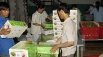 Doanh nghiệp Trung Quốc muốn mua trái cây số lượng lớn tại Cần Thơ