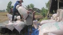 6 tháng: Gạo tiểu ngạch xuất đi Trung Quốc giảm