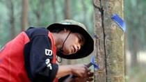 Thái Lan muốn Việt Nam gia nhập tập đoàn cao su Quốc tế nhằm bình ổn giá