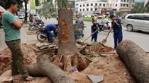 Hà Nội kỷ luật nhiều cá nhân liên quan vụ thay thế cây xanh