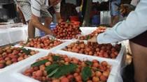Bắc Giang thu hơn 4.000 tỷ đồng từ vụ vải