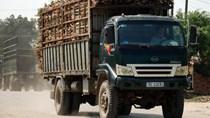 Nhiều nhà máy đường gặp khó vì giá giảm liên tục