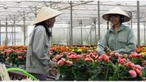 Nikkei: Việt Nam sẽ trở thành trung tâm xuất khẩu hoa hàng đầu Châu Á