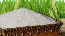 Chỉ số giá gạo giảm 3% do bị cạnh tranh tại thị trường Trung Quốc