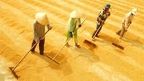Nghịch lý hạt gạo: 70% lợi nhuận thuộc về thương lái, cò lúa và doanh nghiệp