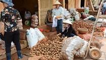 Cấm cửa nông sản TQ núp bóng hàng Việt