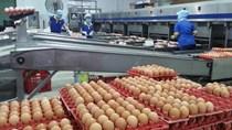 Quy định về nguyên tắc điều hành nhập khẩu đối với mặt hàng muối và trứng gia cầm