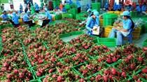 Bộ Công Thương đề nghị rà hoạt động xuất khẩu nông sản, trái cây qua biên giới