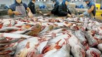 Giữa đại dịch Covid-19, xuất khẩu cá tra đón nhận những tín hiệu lạc quan