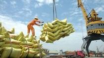 Bộ Công Thương triển khai thực hiện thông báo về điều hành xuất khẩu gạo