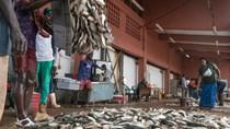 """Đánh bắt cá đang gặp """"nguy hiểm"""" ở các nước đang phát triển"""