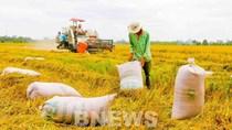 Thị trường nông sản tuần qua: Giá cà phê giảm nhẹ