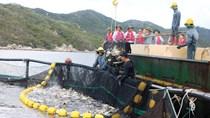 Chiến lược phát triển thủy sản: Yếu công nghệ, lo đầu ra cho tôm cá