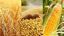 Thị trường TĂCN thế giới 14/1/2021: Ngũ cốc tăng giá trong phiên đóng cửa ngày 13/1