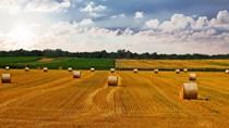 Ấn Độ dự kiến thu hoạch lúa mì, gạo kỷ lục trong năm 2021