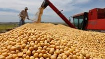 Dự trữ đậu tương của Trung Quốc sẽ giảm đáng kể trong tháng 3/2020
