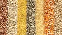 TT ngũ cốc thế giới ngày 27/02/2021: Nhà đầu tư chốt lời cuối tháng gây áp lực lên giá ngũ cốc