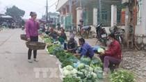 Cao Bằng: Giá các loại rau, củ giảm mạnh