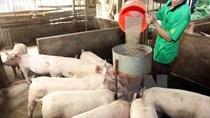 Giá thức ăn chăn nuôi tăng vọt: Doanh nghiệp, người nông dân lao đao
