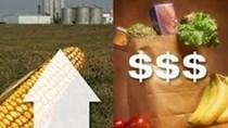 FAO: Chỉ số giá lương thực thế giới tăng