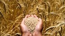 Nguồn cung đậu tương của Brazil sẽ ổn định trở lại vào tháng 3/2021