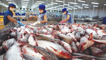 Xuất khẩu cá tra sang thị trường Trung Quốc – Hồng Kông sụt giảm mạnh