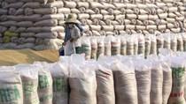 Gạo Việt Nam đạt mức cao nhất 9 năm do nhu cầu thế giới tăng mạnh