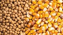 TT ngũ cốc thế giới ngày 30/03/2021: Giá ngô và đậu tương giảm
