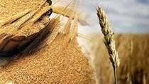 TT ngũ cốc thế giới ngày 05/06/2021: Giá ngũ cốc đồng loạt tăng
