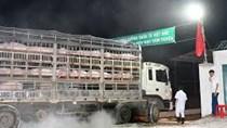 Thái Lan cho biết nguồn lợn xuất sang Việt Nam không bị dịch tả lợn châu Phi