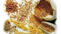 Chỉ số giá lương thực thế giới trong tháng 5 tăng lên mức cao nhất kể từ năm 2011