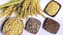 Giá lúa mạch của Pháp phục hồi, hạt cải dầu ở mức thấp nhất trong 20 năm