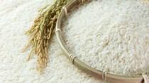 Quy định mới của EU về hạn ngạch nhập khẩu gạo Việt Nam trong EVFTA sẽ có hiệu lực từ 2022