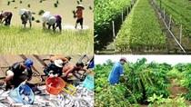 Nông nghiệp vượt khó để duy trì sản lượng