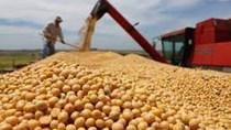 Thu hoạch đậu tương tại Argentina giảm nhẹ