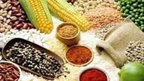 Giá ngũ cốc hôm nay 10/9: Ngô, đậu tương, lúa mì giảm trước báo cáo của USDA