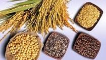 Giá ngũ cốc ngày 13/9: Đậu tương tăng phiên thứ 2 do nhu cầu của Trung Quốc mạnh mẽ