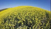 Hạn hán tại Canada gây thiệt hại cho vụ thu hoạch hạt cải dầu và lúa mì