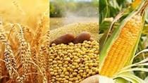 Giá ngũ cốc ngày 23/9: Ngô, đậu tương, lúa mì tăng