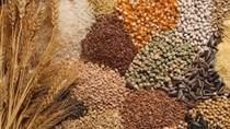 Giá ngũ cốc hôm nay 26/10: Ngô đậu tương bình ổn, lúa mì tăng