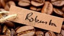 Giá cà phê Robusta xuống thấp nhất 5 năm