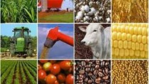 Giá các mặt hàng nông sản thế giới và trong nước ngày 25/1