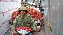 Xuất 1.000 tấn vải thiều/ngày qua cửa khẩu Lào Cai