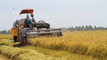 Gạo Việt bứt tốc vào EU