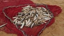 Doanh nghiệp Ma-rốc có nhu cầu mua lưới đánh cá