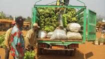 Thực trạng thương mại nông sản của châu Phi