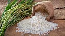Giá lúa gạo ngày 10/11: tiếp tục đi ngang