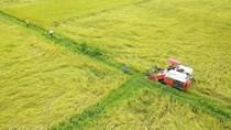 Việt Nam tự tin đủ năng lực xuất khẩu gạo cho nhiều thị trường lớn