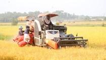 Nhu cầu lớn nhưng nguồn cung hạn chế, xuất khẩu gạo đang chậm lại