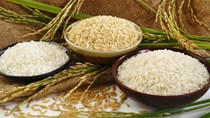 Thị trường lúa gạo ngày 9/3: Giá lúa giảm